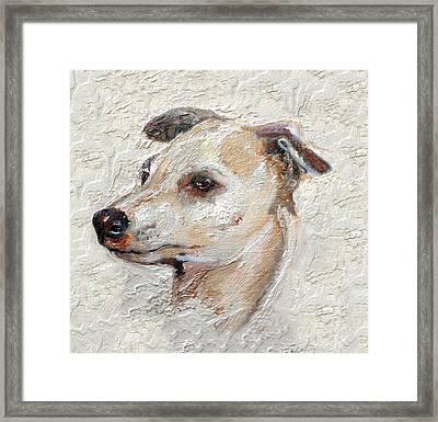 Italian Greyhound Framed Print by Enzie Shahmiri