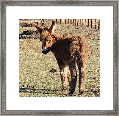 Its A Cow Pasture What Did You Expect Framed Print by Roena King