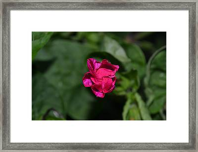 It's Closing Time Framed Print by Amanda Connelly