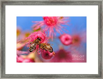 Its My Turn Now... Framed Print by Kaye Menner