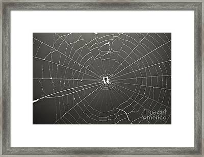 Itsy Bitsy Spider Framed Print by Leslie Leda