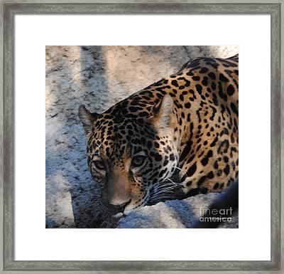 Jaguar In December Framed Print by DiDi Higginbotham