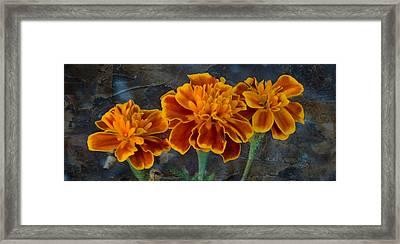 Janet's Marigolds Framed Print by Lisa Moore