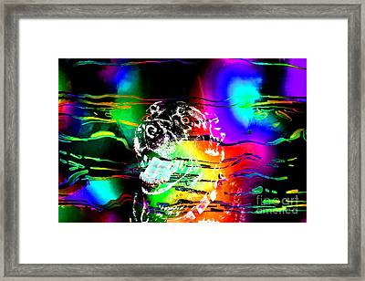Jazzy Smiling Black Lab Framed Print by Barbara Griffin