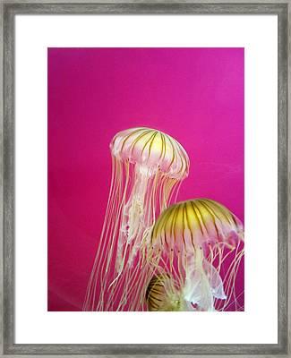 Jellies Framed Print by Nancy Ingersoll