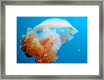 Jellyfish And Small Fish Framed Print by Takau99