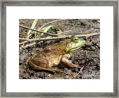 Jeremiah Framed Print by Meandering Photography