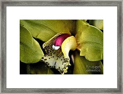 Jimenez Orchid Framed Print by Gwyn Newcombe