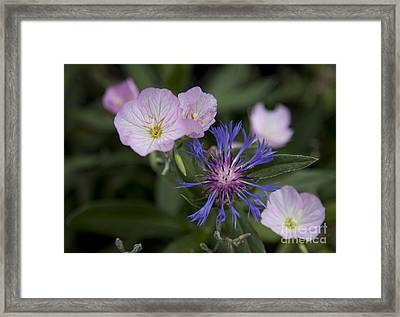 Joined Framed Print by Amanda Barcon