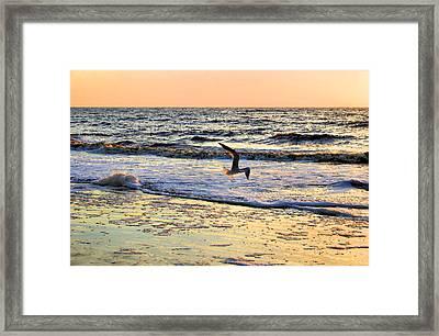 Jonathan Livingston Seagull Framed Print by Kristin Elmquist