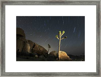 Joshua Tree Star Trails Framed Print by Dung Ma