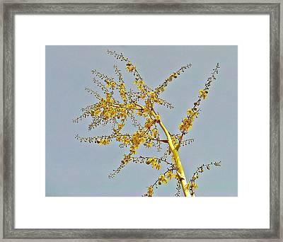 Joy Framed Print by Peter P G