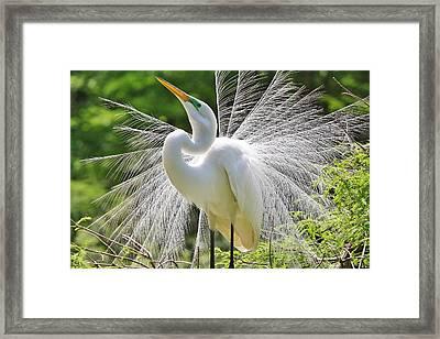 Joyful Framed Print by Paulette Thomas