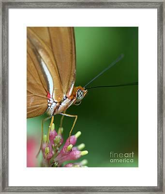 Julia Butterfly Framed Print by Pamela Gail Torres