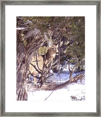 Juniper Deer Framed Print by FeVa  Fotos