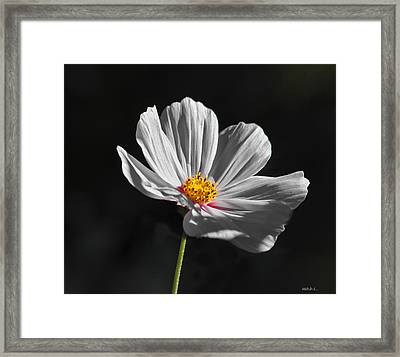 Just A Flower Framed Print by Mitch Shindelbower