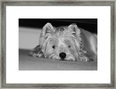 Just Chillin Framed Print by Jon and Chris Zombek