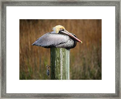 Just Chillin Framed Print by Paulette Thomas