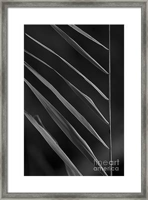 Just Grass Bw Framed Print by Heiko Koehrer-Wagner