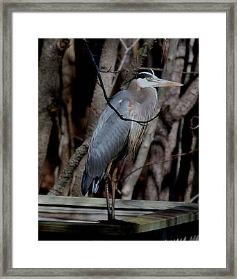 Just Hiding Out Framed Print by Larry Krussel