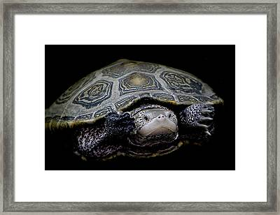 Just Keep Swimming Framed Print by Paulette Thomas