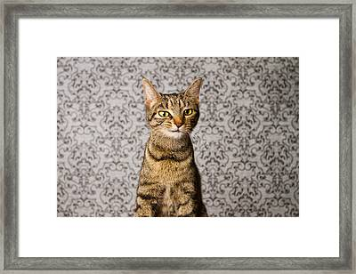 Just Little Weird Framed Print by Square Dog Photography