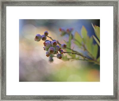 Just Yummy Framed Print by Heidi Smith