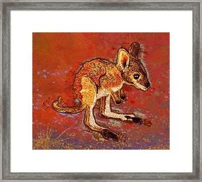 Kangaroo Joey Framed Print by Mary Ogle