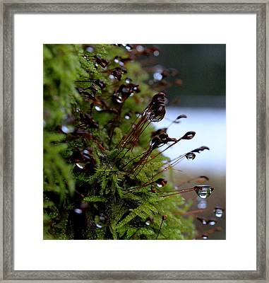 Keep My Memories Framed Print by Marica Jukic