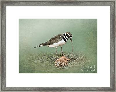 Killdeer And Worm Framed Print by Betty LaRue