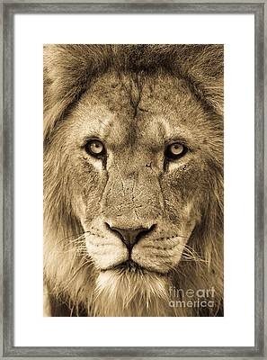 King 2 Framed Print by Andrew  Michael