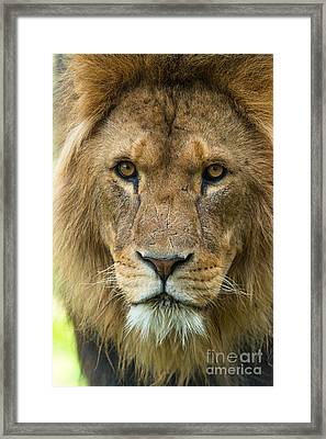 King Framed Print by Andrew  Michael