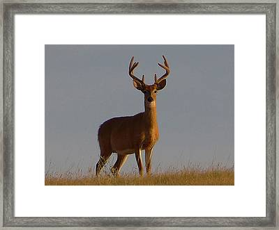 King Of The Hill Framed Print by Blair Wainman