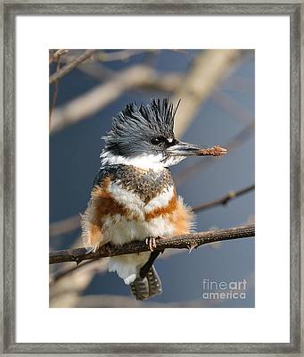 Kingfisher Framed Print by Craig Leaper