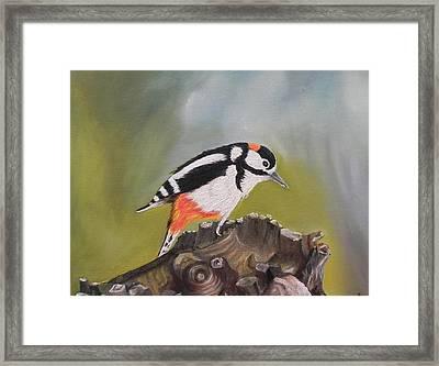 Kingfisher Framed Print by Usha Rai