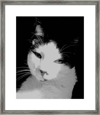 Kit Kat Framed Print by Val Arie