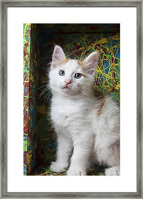 Kitten In Painted Box Framed Print by Garry Gay