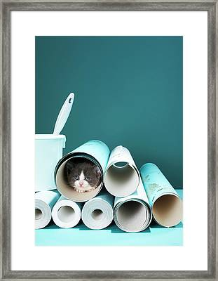 Kitten In Wallpaper Tube Framed Print by Martin Poole