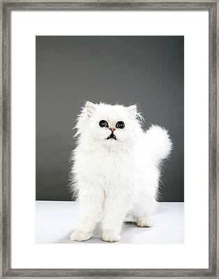 Kitten Portrait Framed Print by Martin Poole