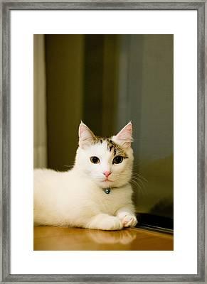 Kitten Posing At Camera Framed Print by Nazra Zahri