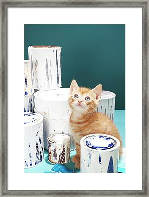 Kitten Sitting Amongst Paint Tins Framed Print by Martin Poole