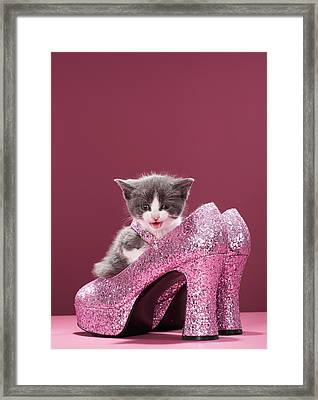 Kitten Sitting In Glitter Shoes Framed Print by Martin Poole