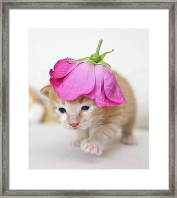 Kitten Walking With Flower Hat Framed Print by Sanna Pudas