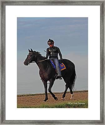Knight Jockey Framed Print by PJQandFriends Photography