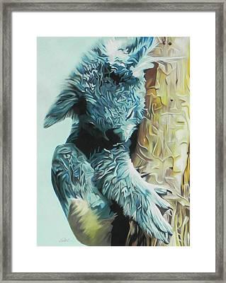 Koala Framed Print by Paul Miners