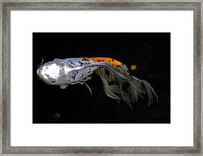 Koi And Coins Framed Print by Kirsten Giving
