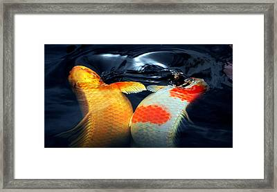 Koi Butting Heads Framed Print by Don Mann