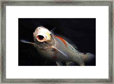 Koi By Surprise Framed Print by Don Mann