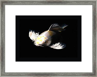 Koi Coming To The Light Framed Print by Don Mann