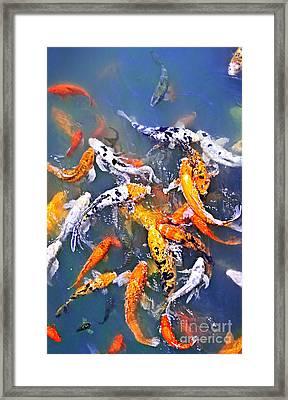 Koi Fish In Pond Framed Print by Elena Elisseeva